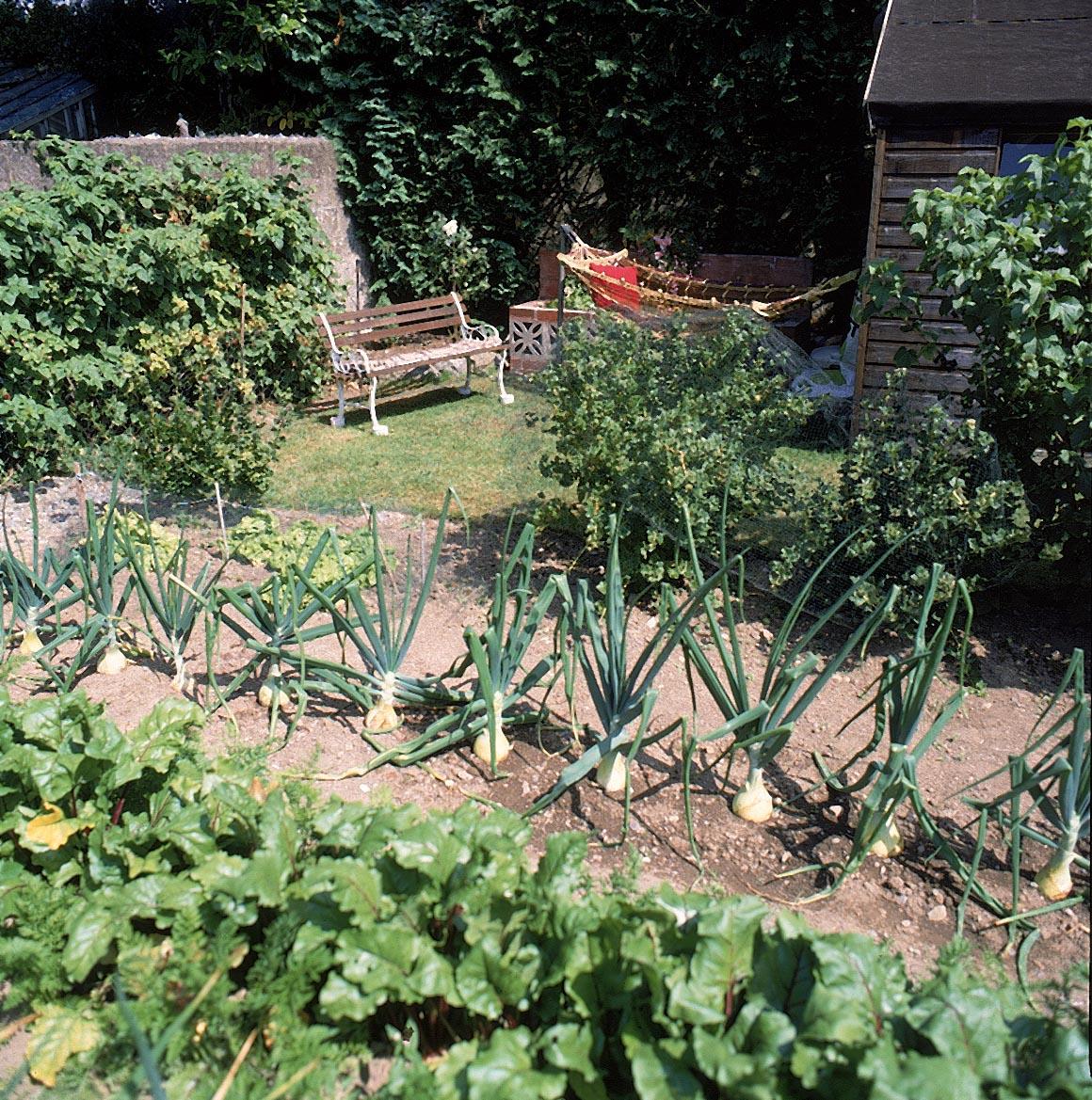 Kitchen Gardening Green Home Landscape Source