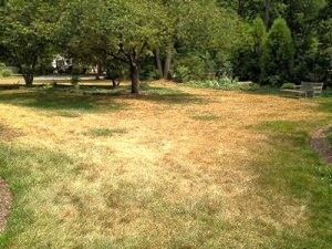 Dry Weather Lawn Care: Let Grass Go Dormant