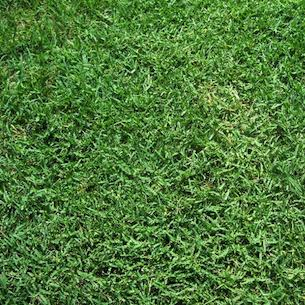 Drought resistant grass green home landscape source - Drought tolerant grass varieties ...