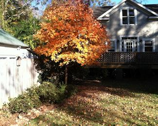 Fall Lawn Care - Leave the Leaves
